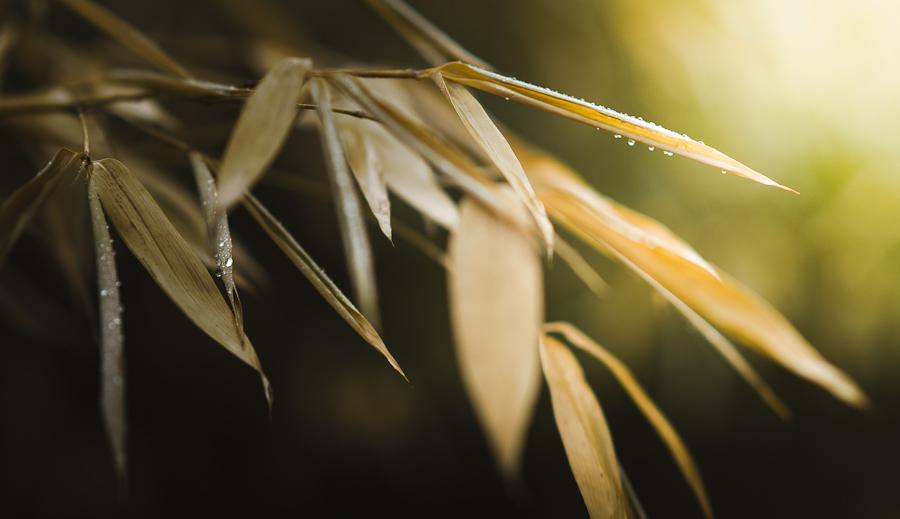 Bambus und Regentropfen
