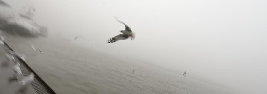 Hamburg. Die Landungsbrücken im Nebel, eine Möve fliegt vorbei, im Hintergrund Schiffe.